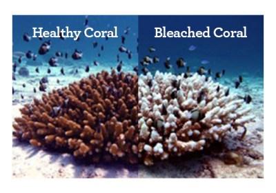 reef safe suncream