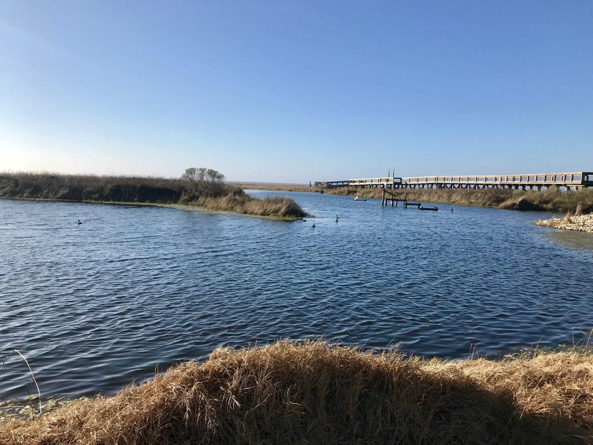 Big Southwestern Trip, Stop #2 Sea Rim State Park in Texas