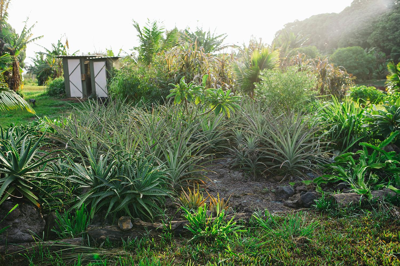 big island farms