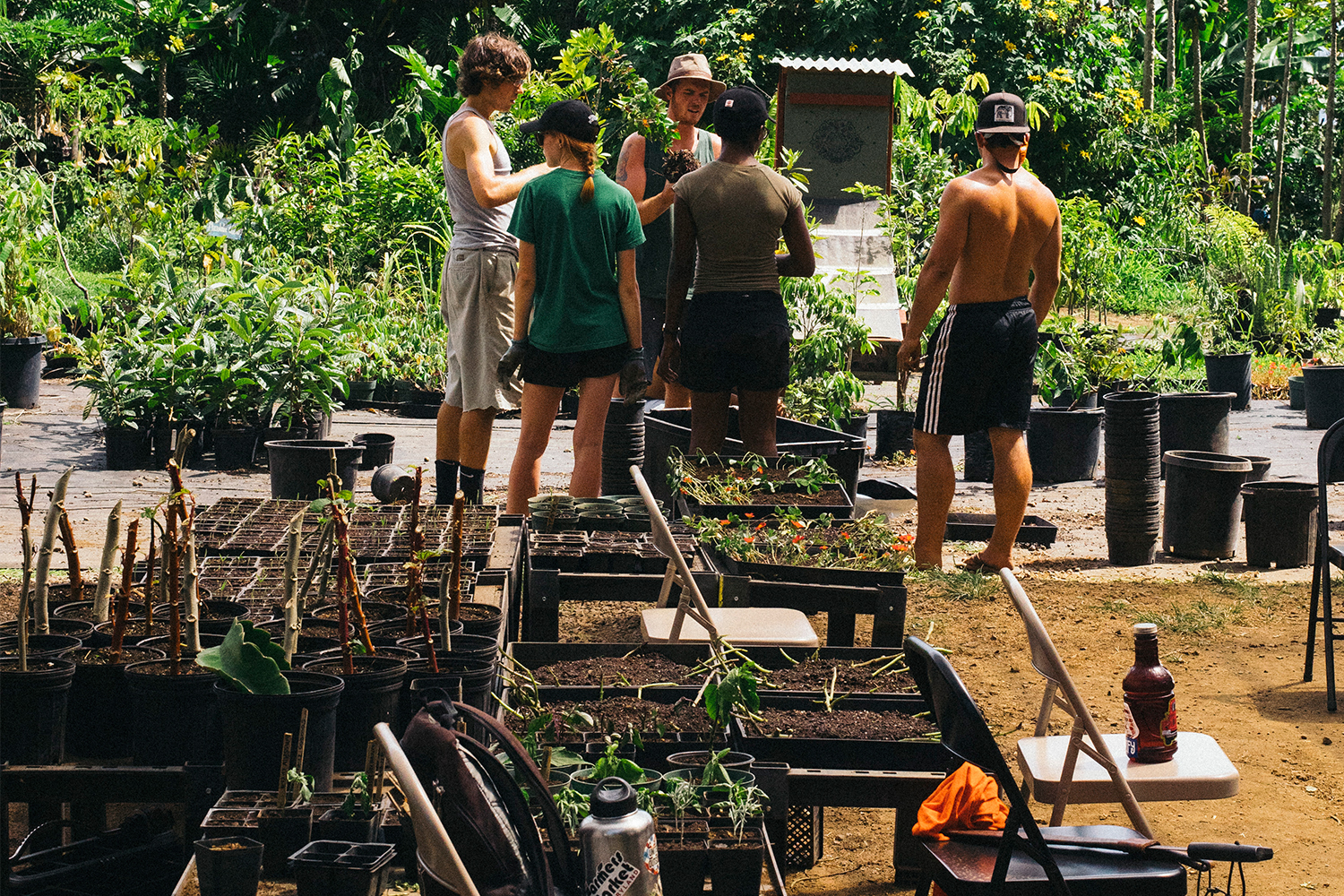 big island farms internships
