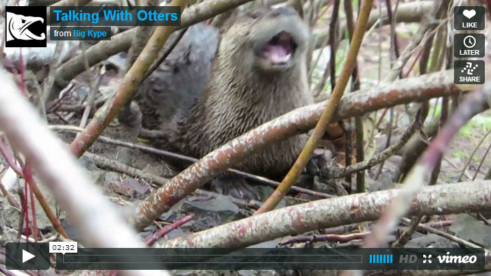 How to talk to otters