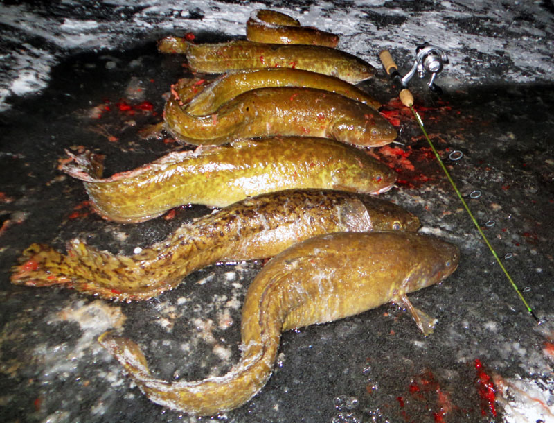 eelpout fishing St. Louis River Lake Superior Minnesota