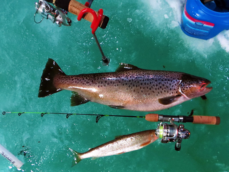 Ice Fishing Lake Superior Brown Trout