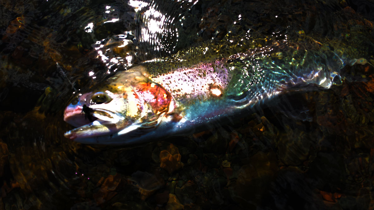 Great Lakes Rainbow Trout