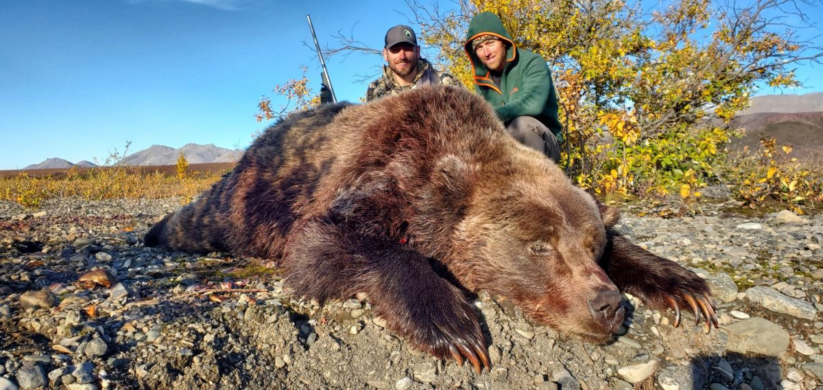 Arctic Grizzly Bear Hunt Alaska