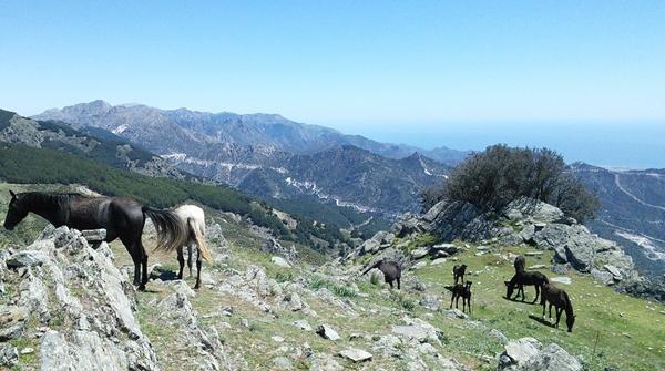 La-Maroma-wild-horses-3