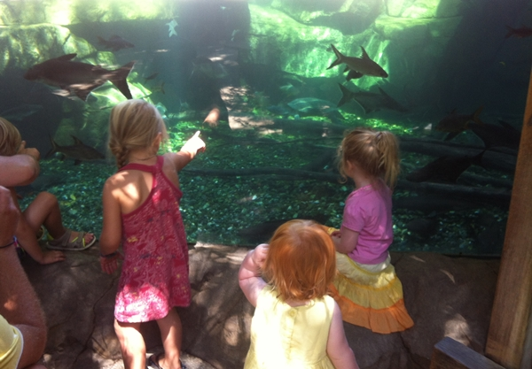 bioparc-aquarium
