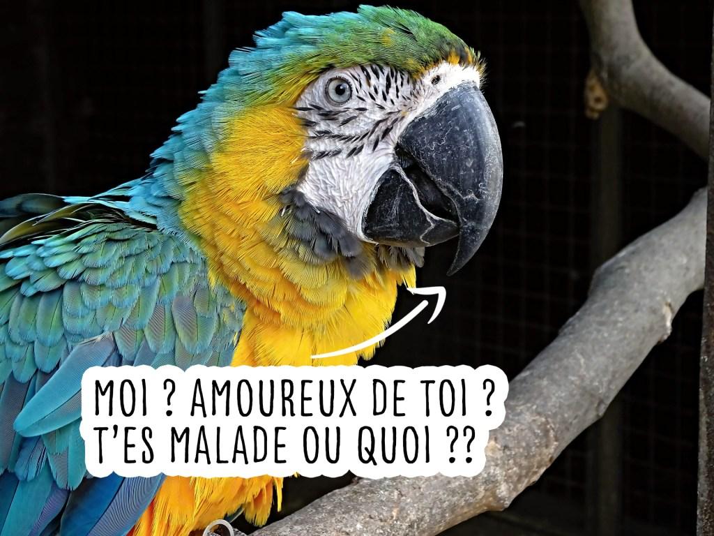 perroquet domestique