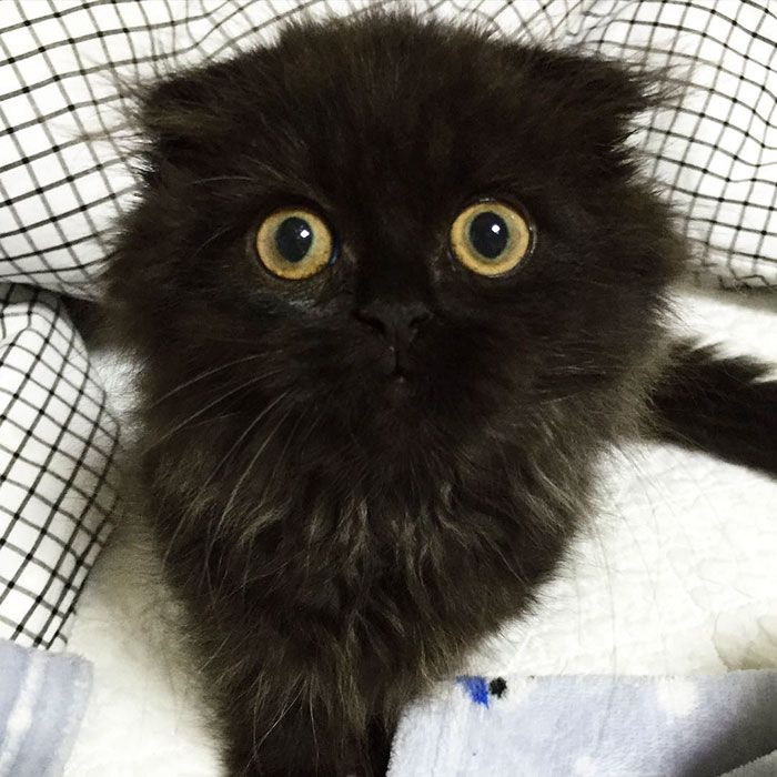 La storia del gatto con gli occhioni ipnotici  Bigodino