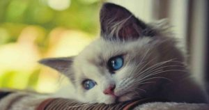 cose-da-non-fare-al-gatto