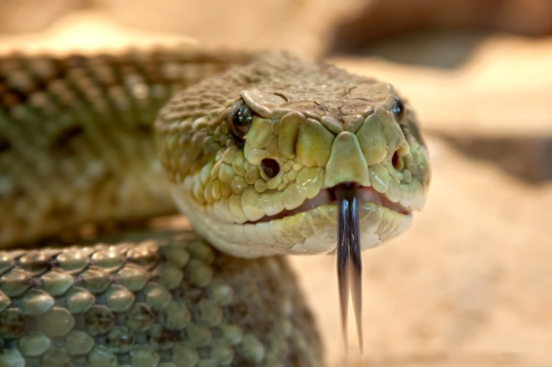 serpenti in casa