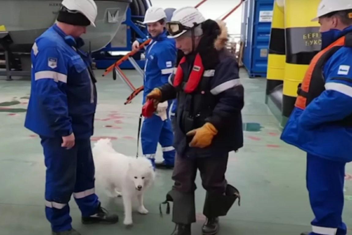 Sailors save poor Aika's life