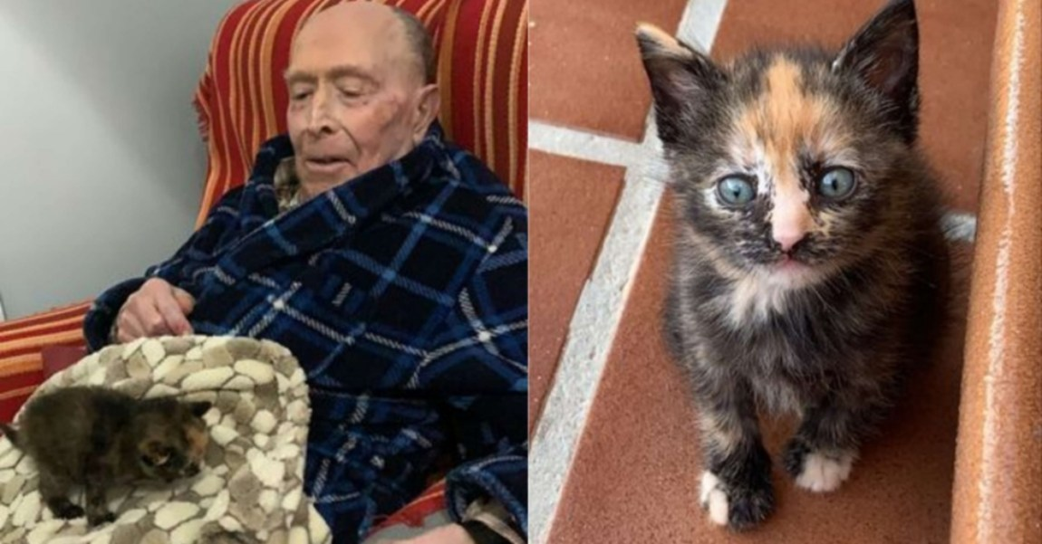 The story of the kitten Bloom and grandfather Manuel