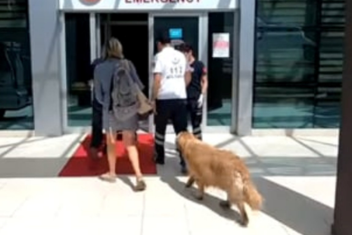 This dog ran after the ambulance his father was traveling in
