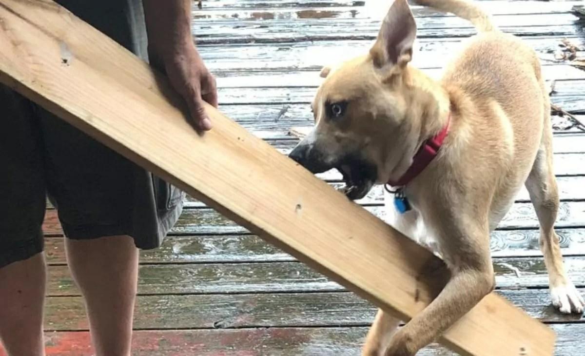 Dog Hank's post