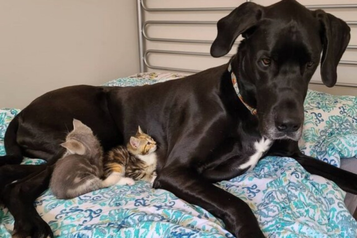 Corbin and his kitten friends