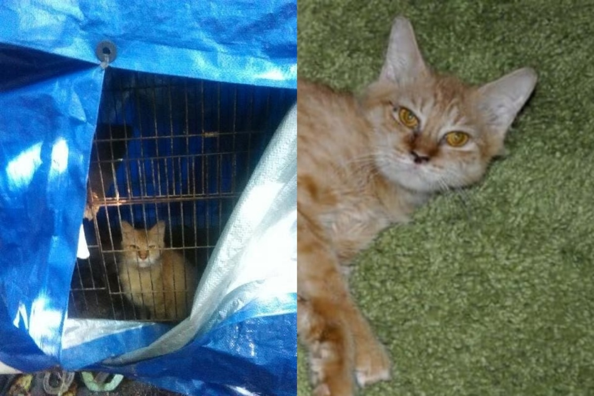 Cat found in a bird cage