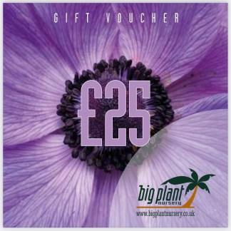 £25 Big Plant Nursery Gift Voucher