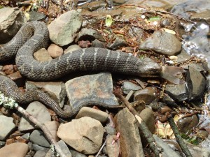 Snake 1, Fish 0