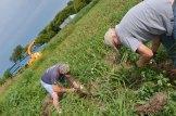 Harvesting is back-breaking work