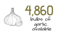 graphic stating 4860 bulbs of garlic available