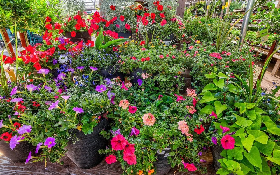 Best Fertilizers For Flowers