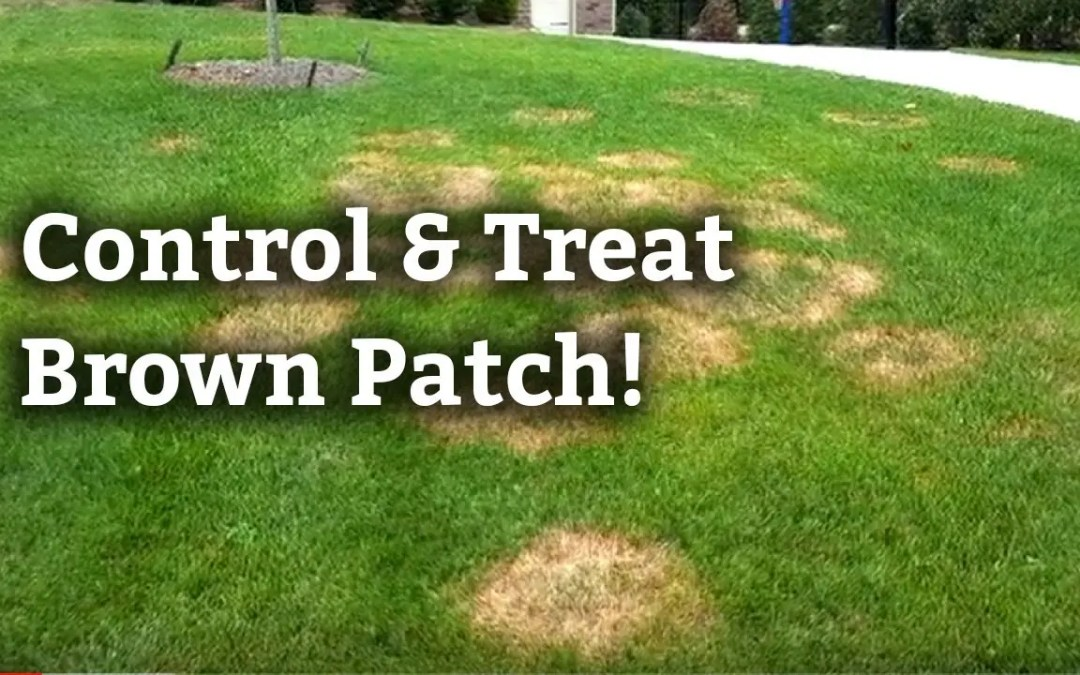 Brown Patch Solutions