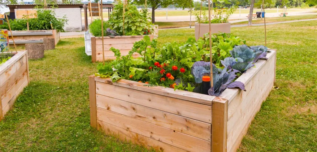 Discover The Steps To Successfully Do Raised Bed Gardening
