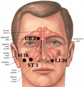 acupressure diagram of pressure points 1994 4l60e wiring how to relieve sinus pain with – big tree school natural healing
