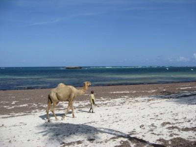 Het conferentie-oord lag vlak aan de Indische Oceaan, waar we konden genieten van een koele bries, en zo nu en dan een kameel (of is het een dromedaris?)