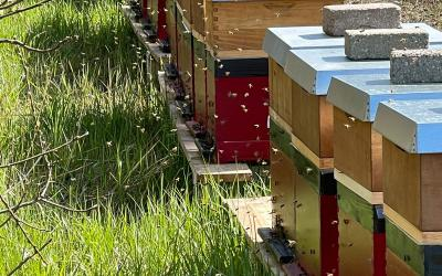 Bijenbaas in Friesland