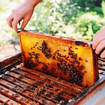 Overeenkomsten tussen bijenkolonies en agile werken