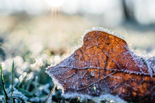 Tuinieren in de winter