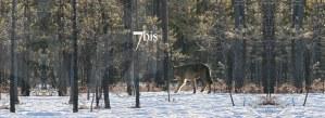 Bijoux 7bis Paris - Fond loup