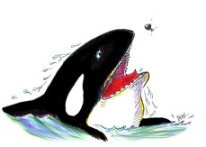 The Orca who learned about friendship the hard way