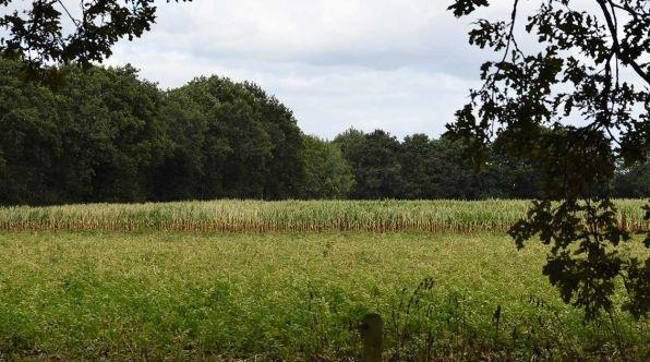 Bijzondere Overnachting Origineel Overnachten Slapen op boerderij De Lange Weide BoerenBed in Dwingeloo7
