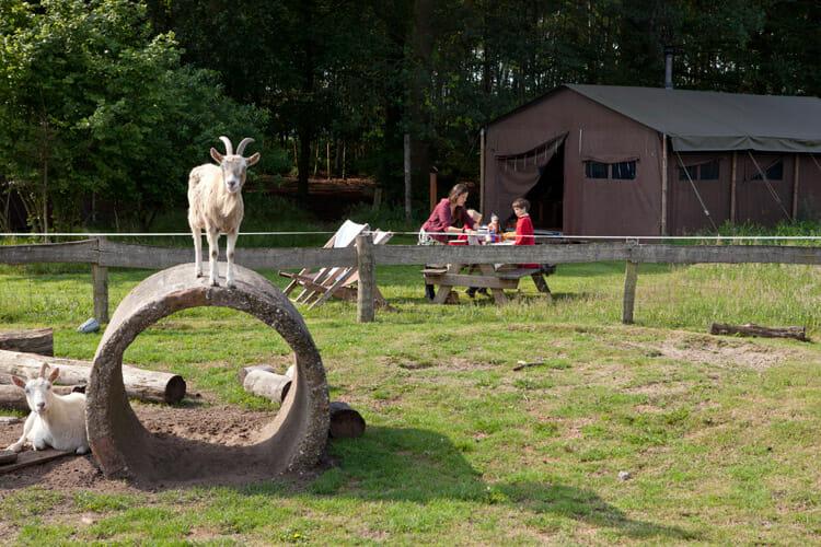 Bijzondere Overnachting Slapen bij de Boer op boerderij het Wesselink Schalkhaar11