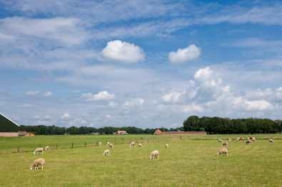 Bijzondere Overnachting Slapen bij de Boer op boerderij het Wesselink Schalkhaar14