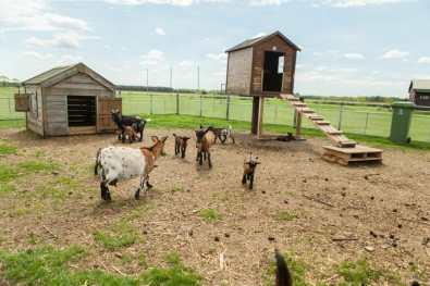 Bijzondere Overnachting Slapen bij de boer op de Brabantse Hei in Hooge Mierde3