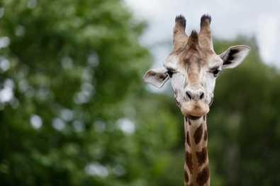 Bijzondere Overnachting Safaripark Resort De Beekse Bergen Hilvarenbeek Brabant2