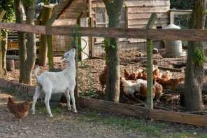 Bijzondere Overnachting Slapen bij de Boer op De Groene Hoeve Wijdenes boerderij Noord-Holland2