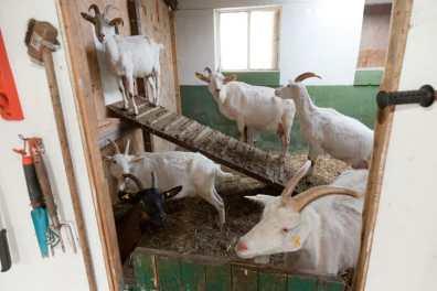 Bijzondere Overnachting Slapen bij de Boer op De Groene Hoeve Wijdenes boerderij Noord-Holland24