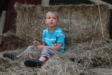Bijzondere Overnachting Slapen bij de Boer op De Groene Hoeve Wijdenes boerderij Noord-Holland6