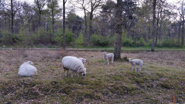 Bijzondere Overnachting Origineel Overnachten Landelijk overnachten in deze Friese Lyklamastate6