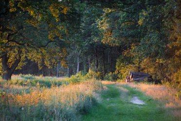 Bijzondere Overnachting Origineel Overnachten Slapen op een boerderij de Jobinghoeve in Grolloo met knuffelschuur in Drenthe5