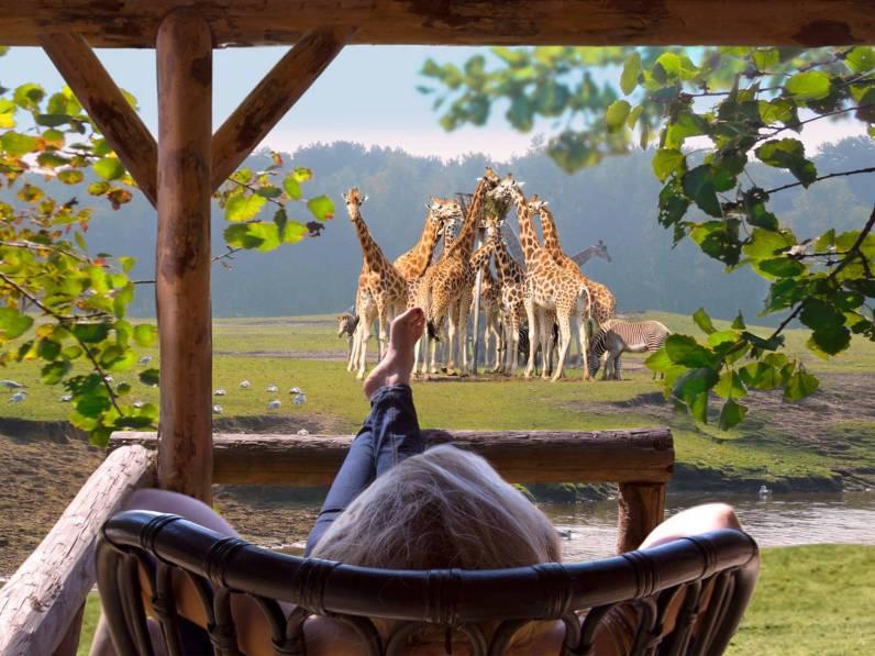 75 euro kortingscode Safari Resort Beekse Bergen7