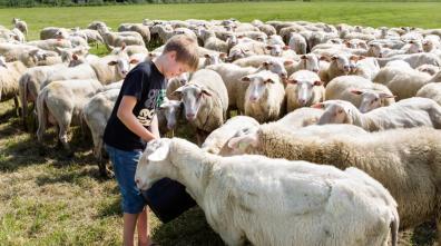Bijzondere Overnachting Origineel Overnachten BoerenBed Slapen bij de Boer op schapenboerderij Texel12