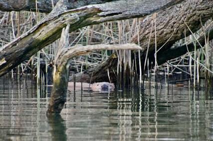 Bijzondere Overnachting Origineel Overnachten Slapen op het water in een aquahome biesbosch12