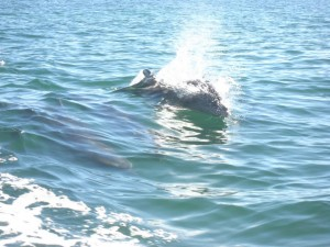 Bike-urious does Baja - Dolphins