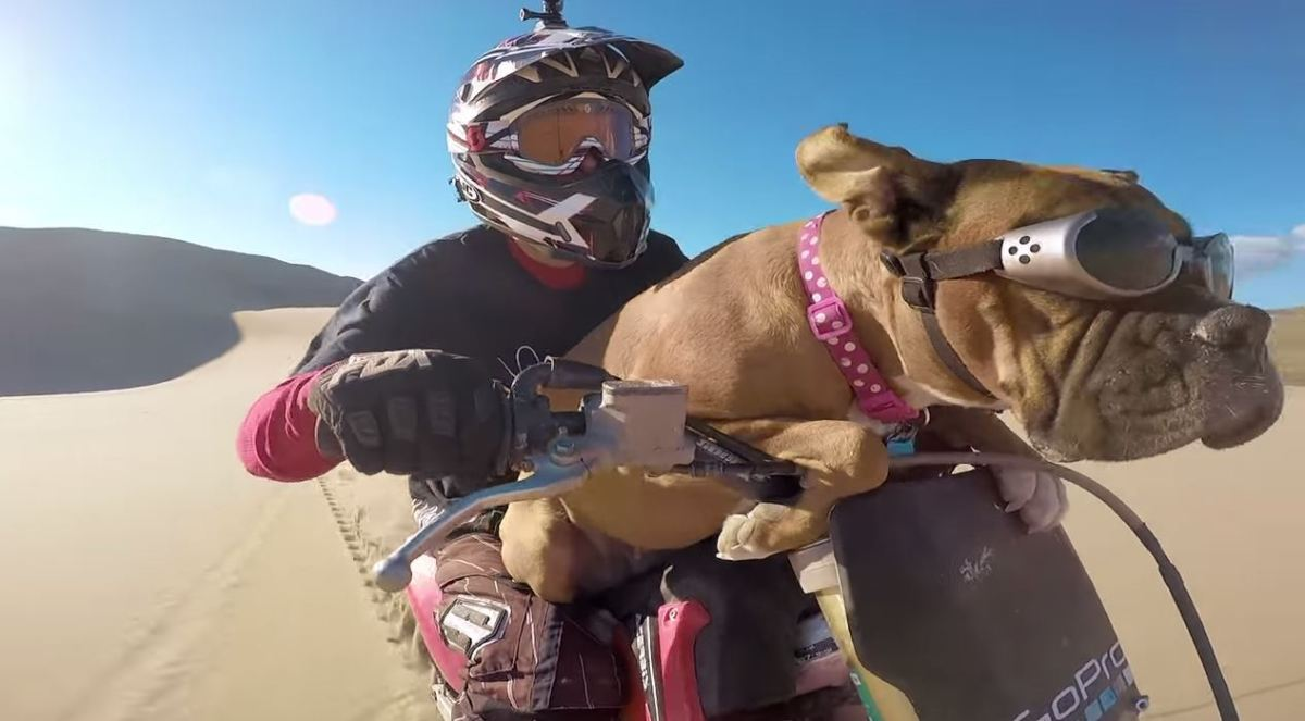Video Intermission Lexus The Dirt Bike Dog Urious Camel Honda Pit